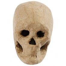 Kranium i papmaché - H: 10 cm.