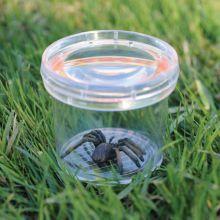 Insektglas - Lup i låget