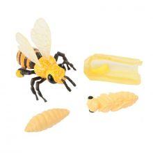 Livscyklus: Fra æg til insekt - Honningbi