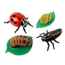 Livscyklus: Fra æg til insekt - Mariehøne