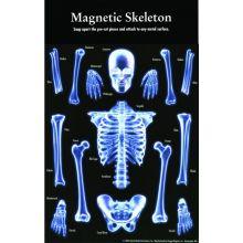 Magnetisk skelet