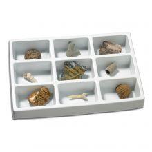 Min samling af fossiler