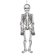 Skelet (glow in the dark) i karton, 120 cm.