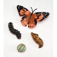 Livscyklus: Fra æg til insekt - Sommerfugl