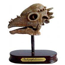 Udgravningssæt - Pachycephalosaurus